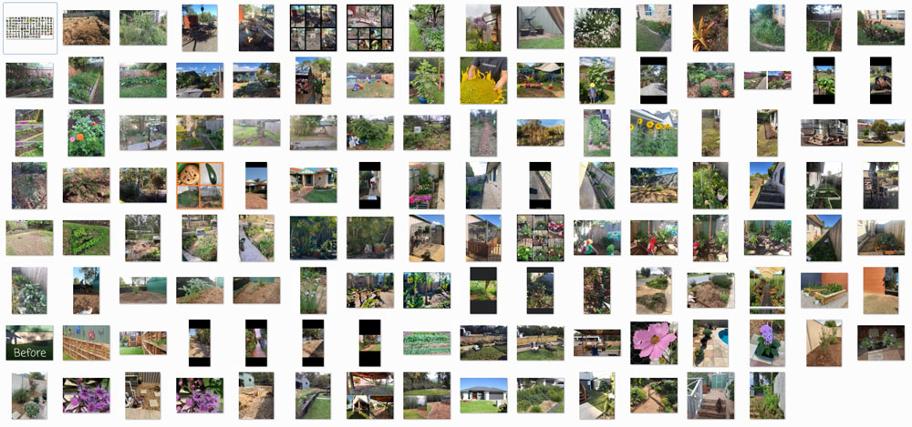 AA_beegardencomp_webcollection1.jpg