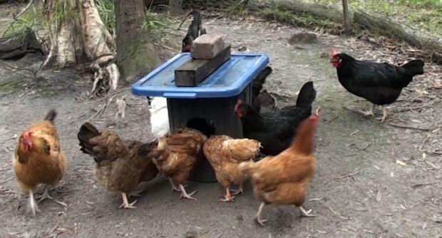 chicken feeder no mess bulk bin 620.jpg
