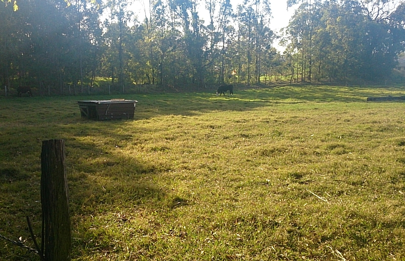 chicken house in middle of paddock.jpg