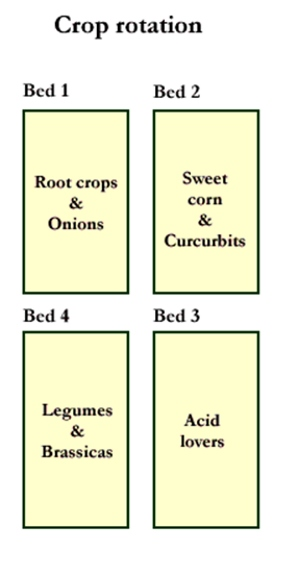 crop rotation 4yr bed plan.jpg