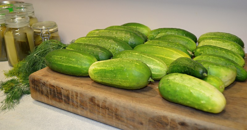 cucumbers on chopping board ready for fermenting.jpg