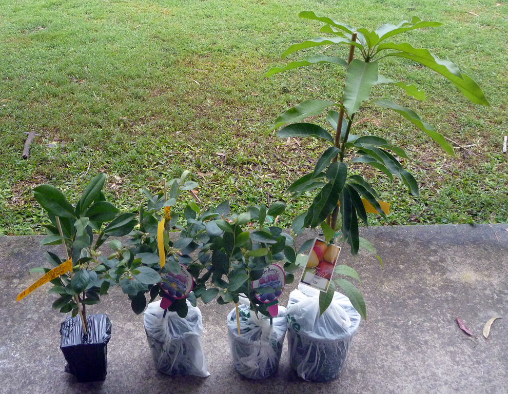 Daley's-Fruit-Trees.jpg