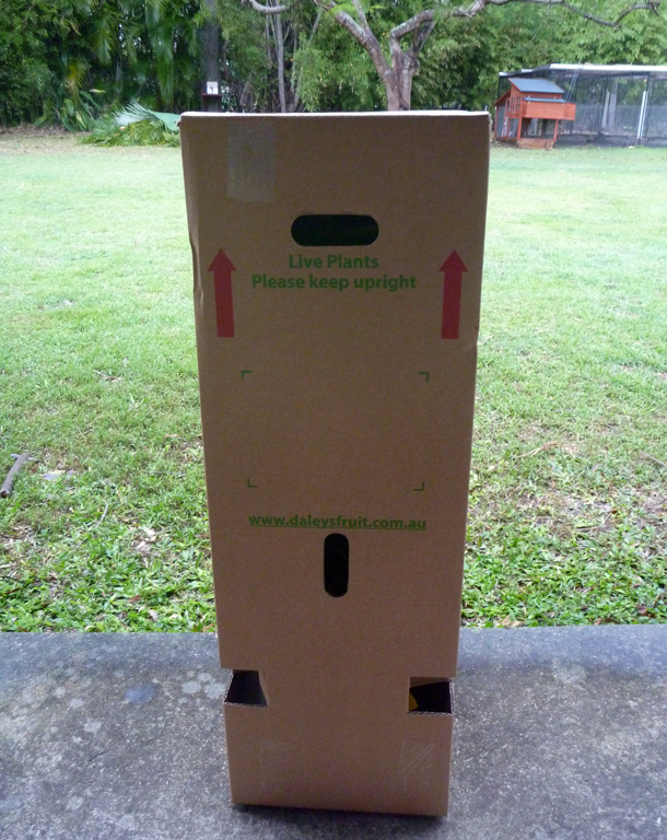 Daley's-Plant-Box.jpg