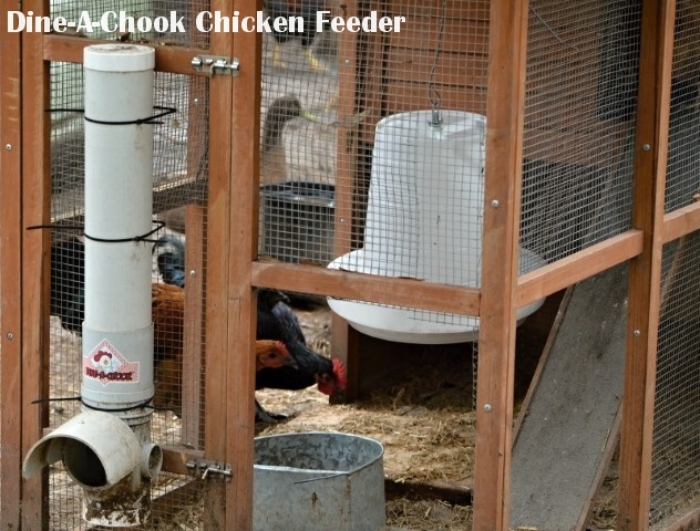 feeder chicken large treadle proof poultry product reveiws rodent equipment feeders reviews grandpas