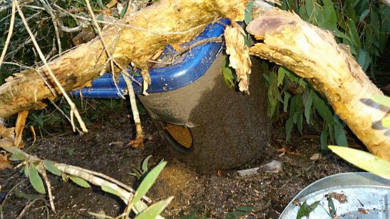 dit chicken feeder crushed by tree.jpg