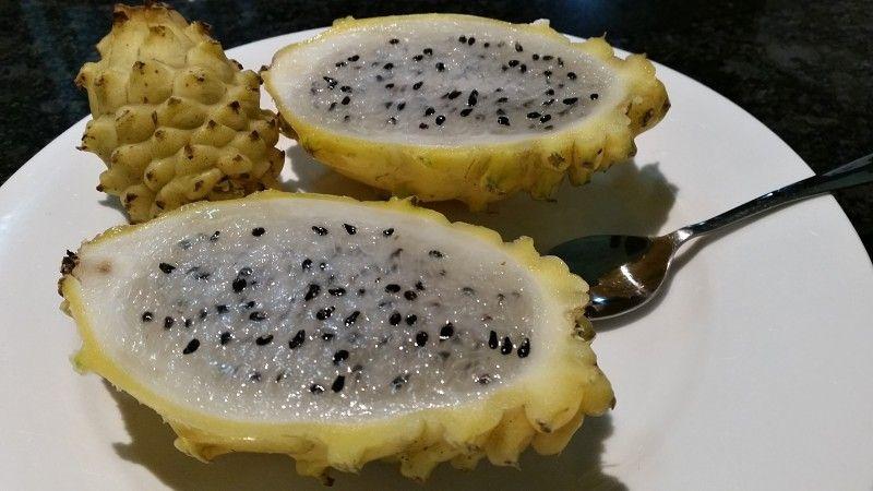 dragon fruit on holiday in half yellow variety.jpg
