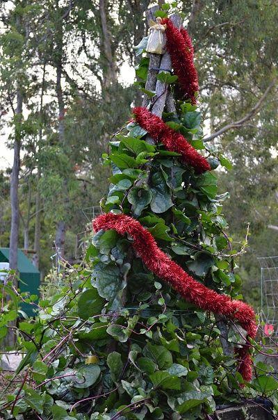 edible christmas tree climbing spinach.jpg