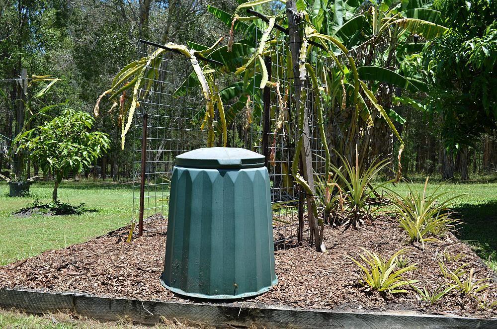fibre glass compost bin in dragon fruit patch.jpg