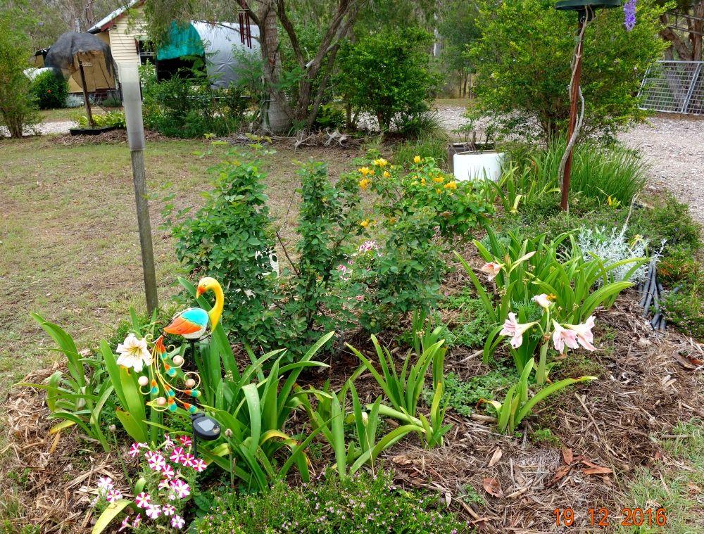 flower garden 1.jpg