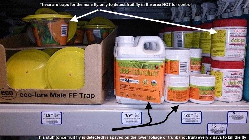 fruit fly traps and killer ecolure.jpg