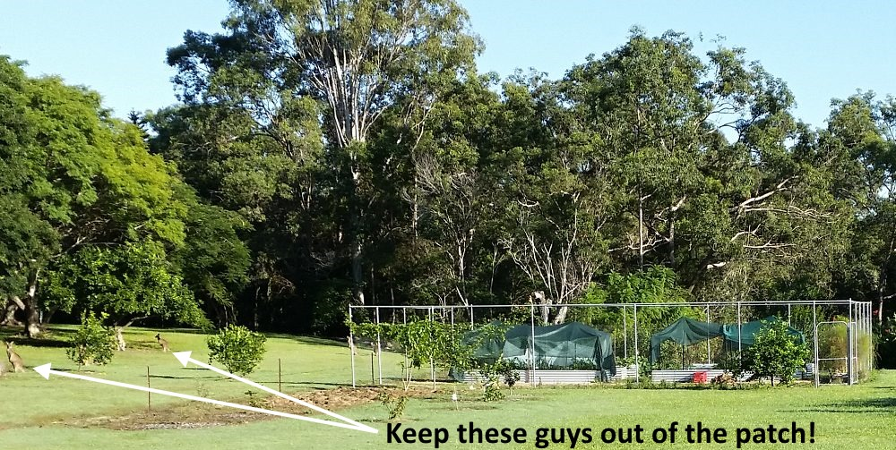 Great Example Of Enclosed Vegetable Garden To Keep Animals Out Self Sufficient Culture