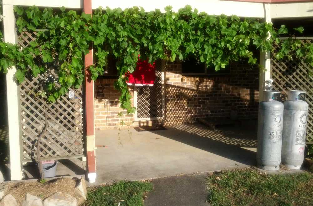 Grape vine house 1000.jpg
