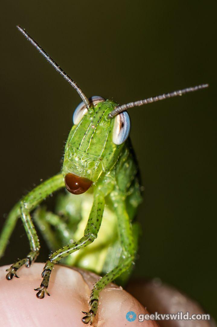 gvw_grasshopperdroplet.jpg