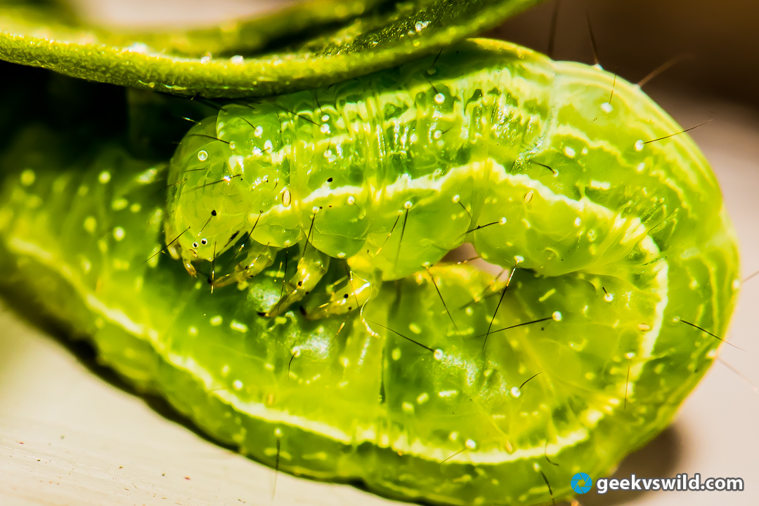 gvw_greengrub.jpg