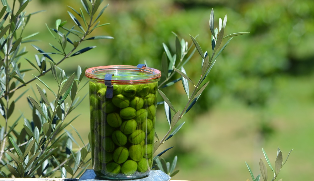 home cured and grown green olives in preserving jar.jpg