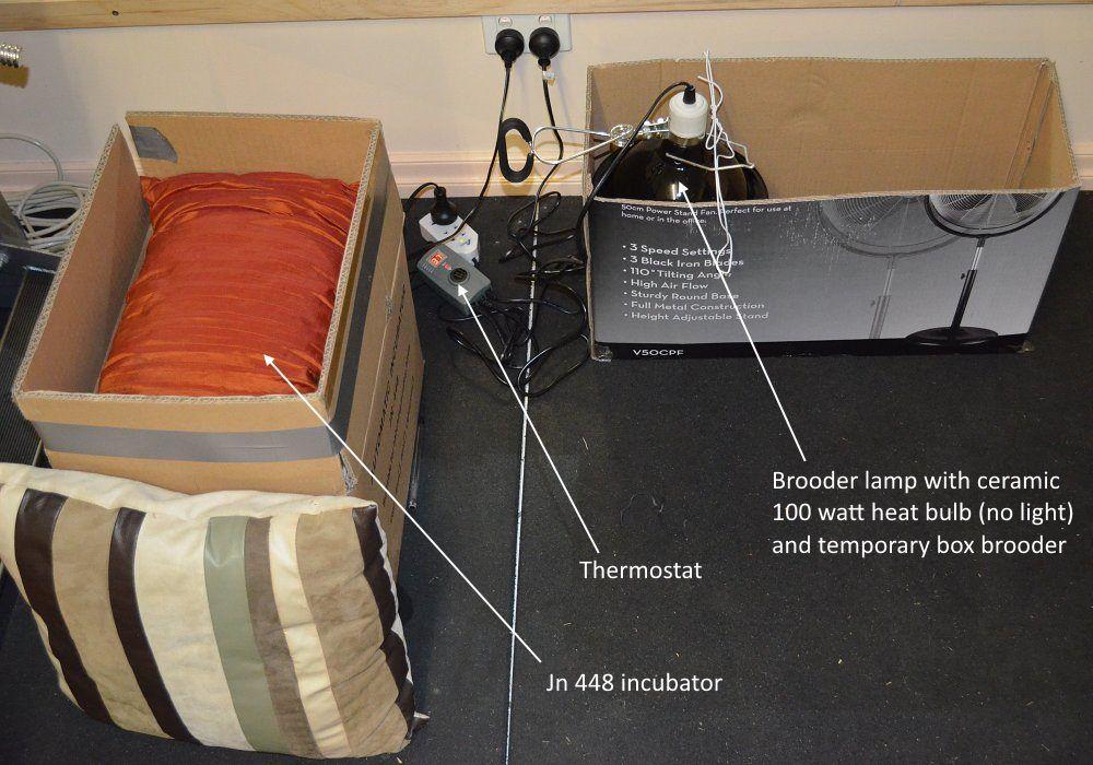 incubator jn 448 and brooder in operation setup.jpg