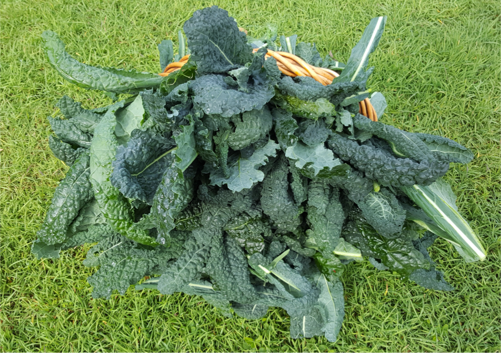 Kale Harvest.jpg