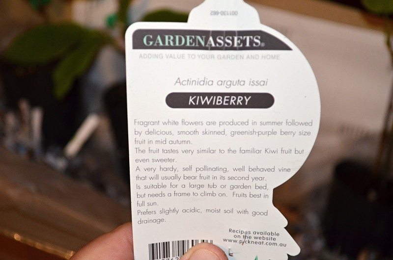 kiwiberry label growing directions.jpg