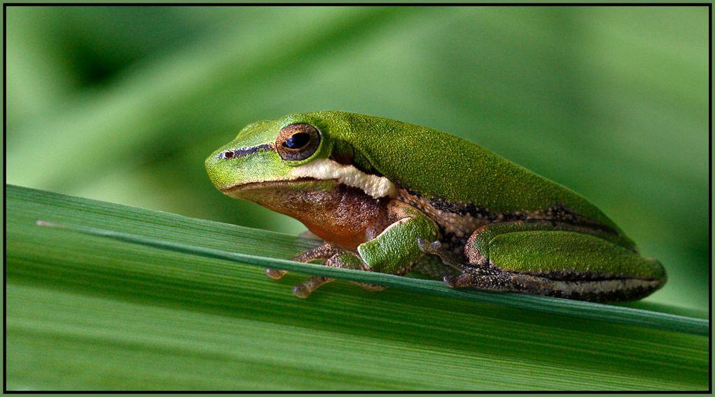 Little-Frog-.jpg
