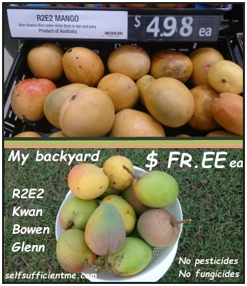 mango supermarket vs my backyard.jpg