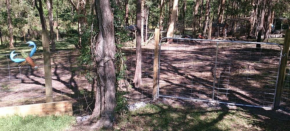 my gate for chicken paddock.jpg