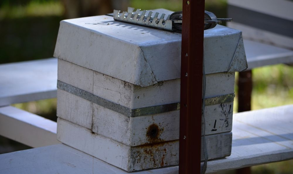 Native bee hive showing entry exit hole.jpg