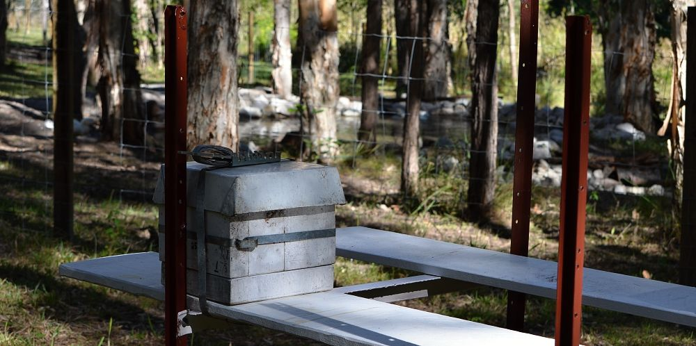 Native bee hive with dam in background.jpg