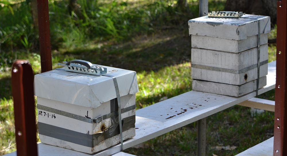 Native bee hives set up on bench two different sizes.jpg