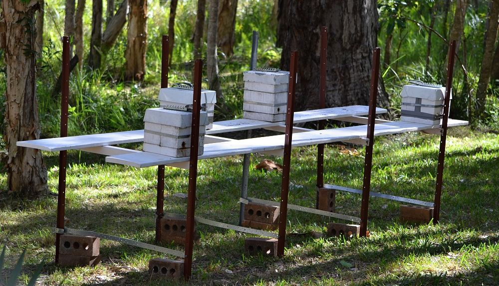 Native bees set up on bench.jpg