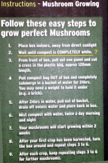 oyster mushroom kit growing instructions crop.jpg