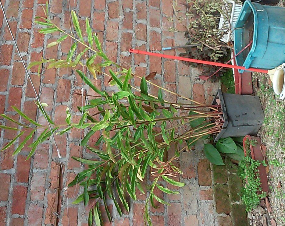 Plant ID.jpg