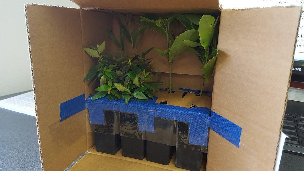 plantsinbox.jpg