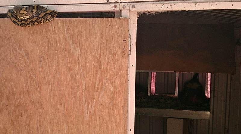 python top of door chicken house.jpg
