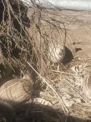 quails.png
