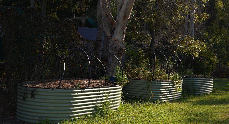 raised colorbond vegetable garden beds.jpg