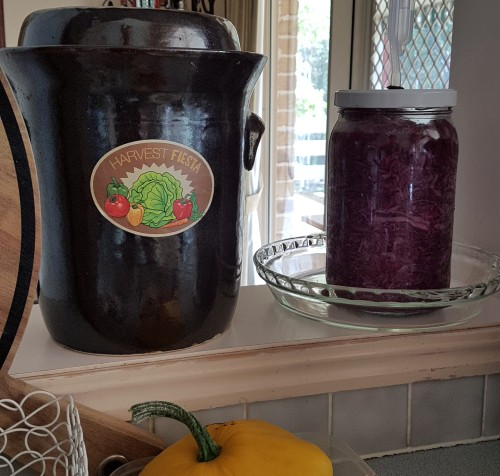 sauerkraut clay pot and glass jar fermentation lacto red mammoth rock purple cabbage organic.jpg