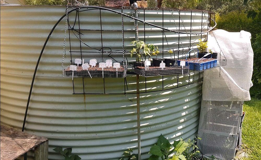 seed raising area 1000.jpg