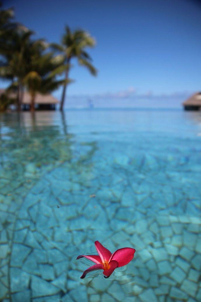 Tahiti Photos - all 56101jpgsmall.JPG