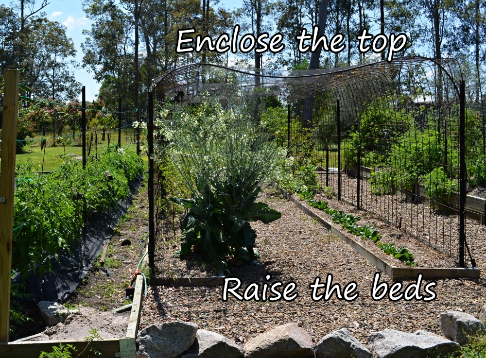 tomato trellises post to post and reo mesh future plan.jpg