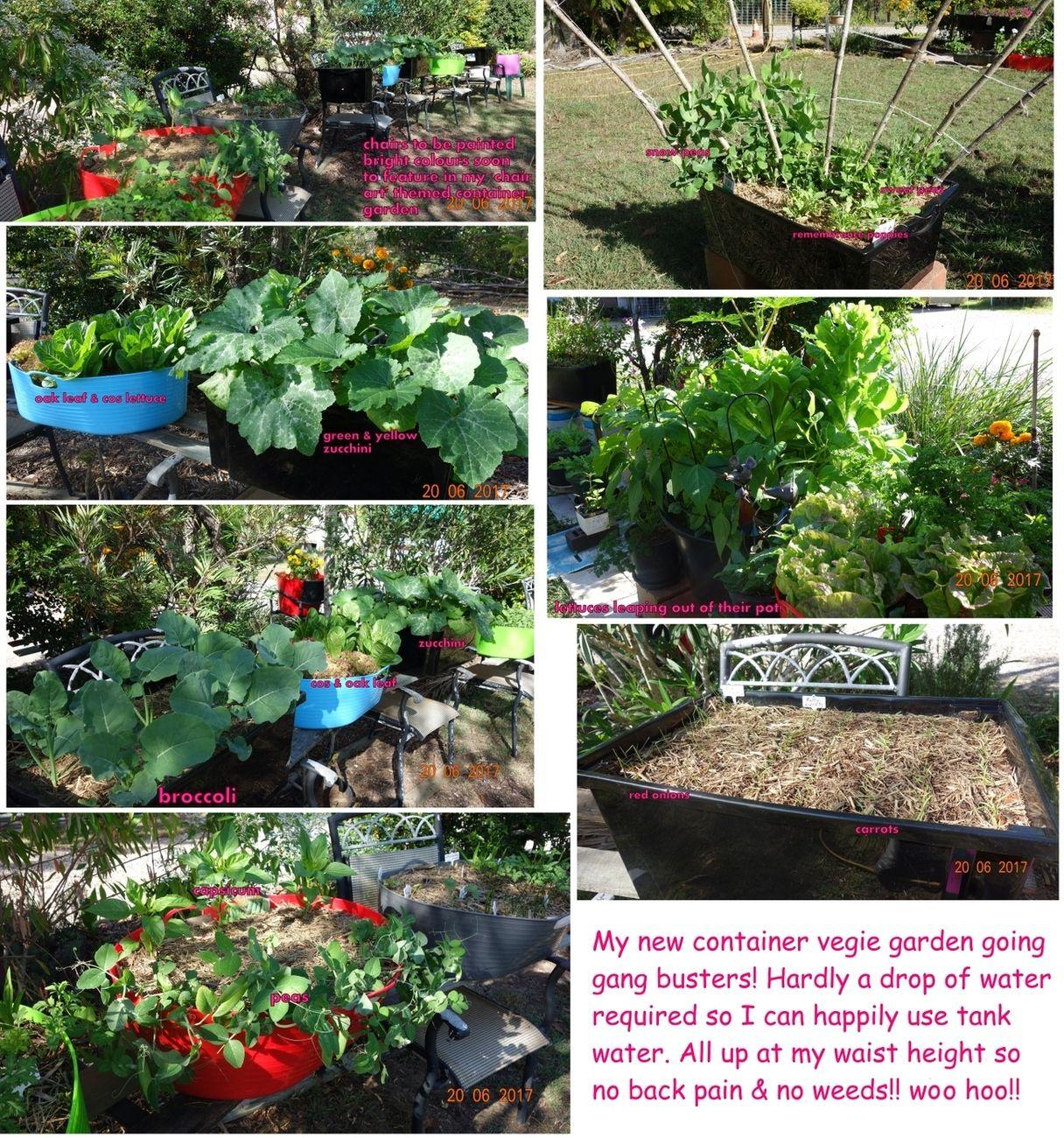 Winter container garden collage.jpg