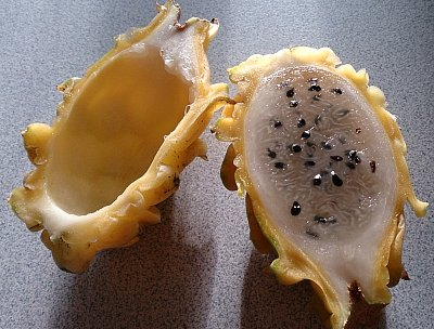 yellow dragon fruit half eaten.jpg