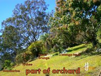 part of orchard.jpg