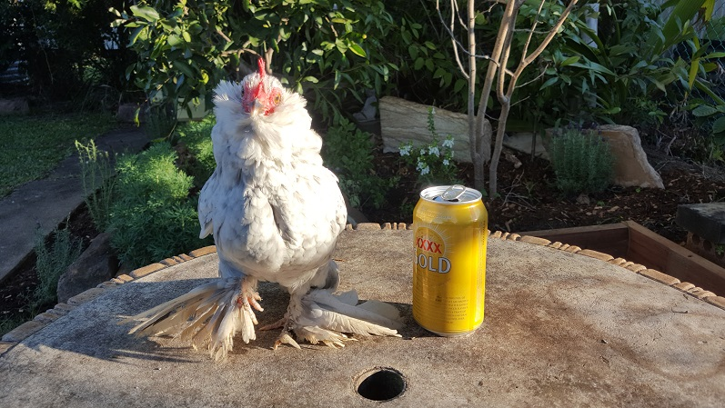 Chooky Beers